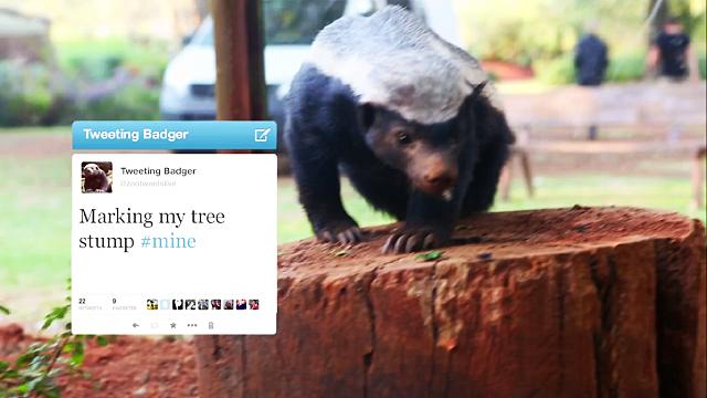 honey_badger_tweeting